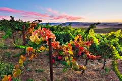 Recherche la couleur d'automne image stock