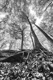 Recherche parmi des arbres Photos stock