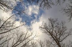 Recherchez au ciel bleu par des arbres Photographie stock libre de droits