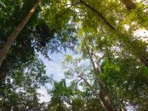 Recherchez au ciel dans la forêt Photo stock