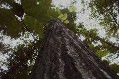 Recherchez au ciel et sentez la profondeur Photographie stock libre de droits
