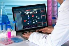Recherchez le généticien à l'aide de l'ordinateur avec de l'ADN d'essai de structure en Bi Photos stock