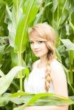 Recht blond auf dem Maisgebiet Stockfotografie