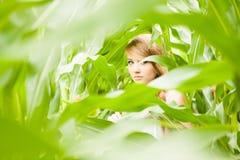 Recht blond auf dem Maisgebiet Lizenzfreies Stockfoto