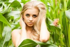 Recht blond auf dem Maisgebiet Lizenzfreies Stockbild