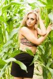 Recht blond auf dem Maisgebiet Stockfotos
