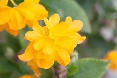 Recht gelbe Blumen Lizenzfreie Stockfotografie
