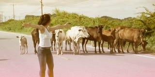 Recht junge Asiatin genießen Sommertag mit Kuh auf einer Straße Lizenzfreie Stockfotos