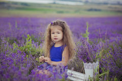 Recht junges Mädchen, das auf dem Lavendelgebiet in der netten Hutkreissäge mit purpurroter Blume auf ihr sitzt Stockfotografie