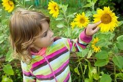 Recht kleines Mädchen betrachtet Sonnenblume im Garten Lizenzfreies Stockbild