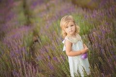 Recht nettes kleines Mädchen trägt weißes Kleid auf einem Lavendelgebiet, das einen Korb voll von den purpurroten Blumen hält Lizenzfreies Stockfoto