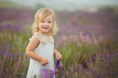 Recht nettes kleines Mädchen trägt weißes Kleid auf einem Lavendelgebiet, das einen Korb voll von den purpurroten Blumen hält Stockfoto