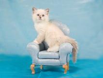 Recht nettes Ragdoll Kätzchen auf Ministuhl Stockbild
