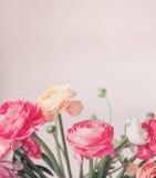 Recht Pastellfarbe blüht das Blühen am hellen Hintergrund, Blumengrenze lizenzfreie stockfotos