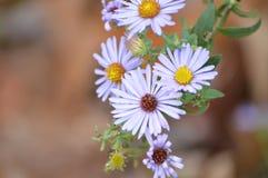 Recht purpurrote Wildflowers im Frühjahr Lizenzfreie Stockfotos