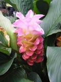 Recht rosafarbene Blume lizenzfreie stockbilder