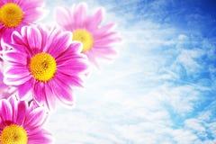 Recht rosafarbene Blumen Stockbild