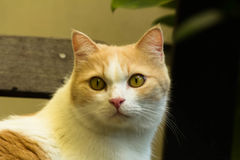 Recht rote Katze Stockfotos