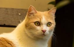 Recht rote Katze Lizenzfreie Stockfotografie