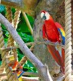 Recht roter Papagei Lizenzfreies Stockfoto