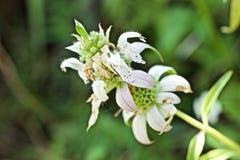 Recht tropische Blume stockfoto