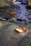 Recht tropischer Nebenfluss in Nord-Queensland lizenzfreie stockbilder