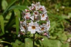 Recht weiße Blumen Stockfotografie