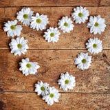 Recht weißes Herz von köstlichen weißen Frühlingsgänseblümchen Lizenzfreie Stockbilder