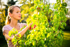 Recht weiblicher Gärtner Stockfoto