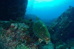Recht zurück von einer Meeresschildkröte Lizenzfreie Stockbilder