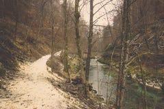 Rechte Bahn und klarer Fluss der Kurve im Wald Lizenzfreies Stockbild