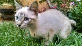 Rechte lucht witte kat royalty-vrije stock fotografie