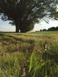 Rechte rij van bomen Stock Foto's