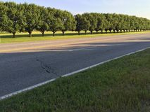Rechte rij van bomen Stock Afbeelding