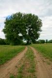 Rechte Seite des großen Baums durch Straße in der grünen Wiese Lizenzfreies Stockbild