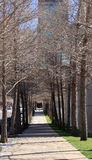 Rechte weg en bomen binnen de stad in van stad Stock Fotografie