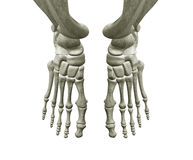 Rechter und linker Fuß-Knochen stock abbildung