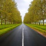 Rechtstreeks lege natte weg tussen bomen. De Loire-vallei. Frankrijk. Stock Foto's
