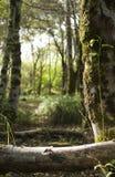 Rechtwinkliger Baum Lizenzfreies Stockfoto