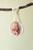 Recién nacido y una ramificación en estudio fotografía de archivo