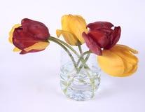 Recicl seu frasco Imagem de Stock