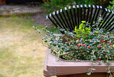 Reciclagem de resíduos do jardim Foto de Stock Royalty Free