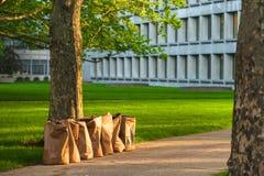 Reciclaje de las bolsas de papel de los restos de jardinería Fotografía de archivo libre de regalías