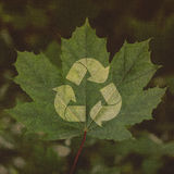 Recicle el símbolo en un fondo de la hoja verde fotos de archivo