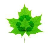 Recicle el símbolo sobre la hoja de arce verde Imagen de archivo libre de regalías