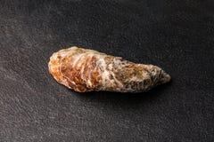 Recientemente, crudas y solas ostras en un fondo negro Ostras crudas enfriadas Molusco tropical delicioso del mar Copie el espaci fotografía de archivo