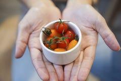 Recientemente tomates de cereza a mano fotografía de archivo