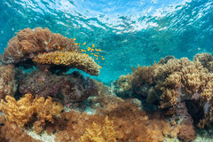 recife fotografia de stock