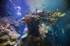 recife Fotografia de Stock Royalty Free