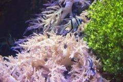recife Imagens de Stock